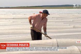 На полях Чехии не хватает украинских работников: много урожая может пропасть