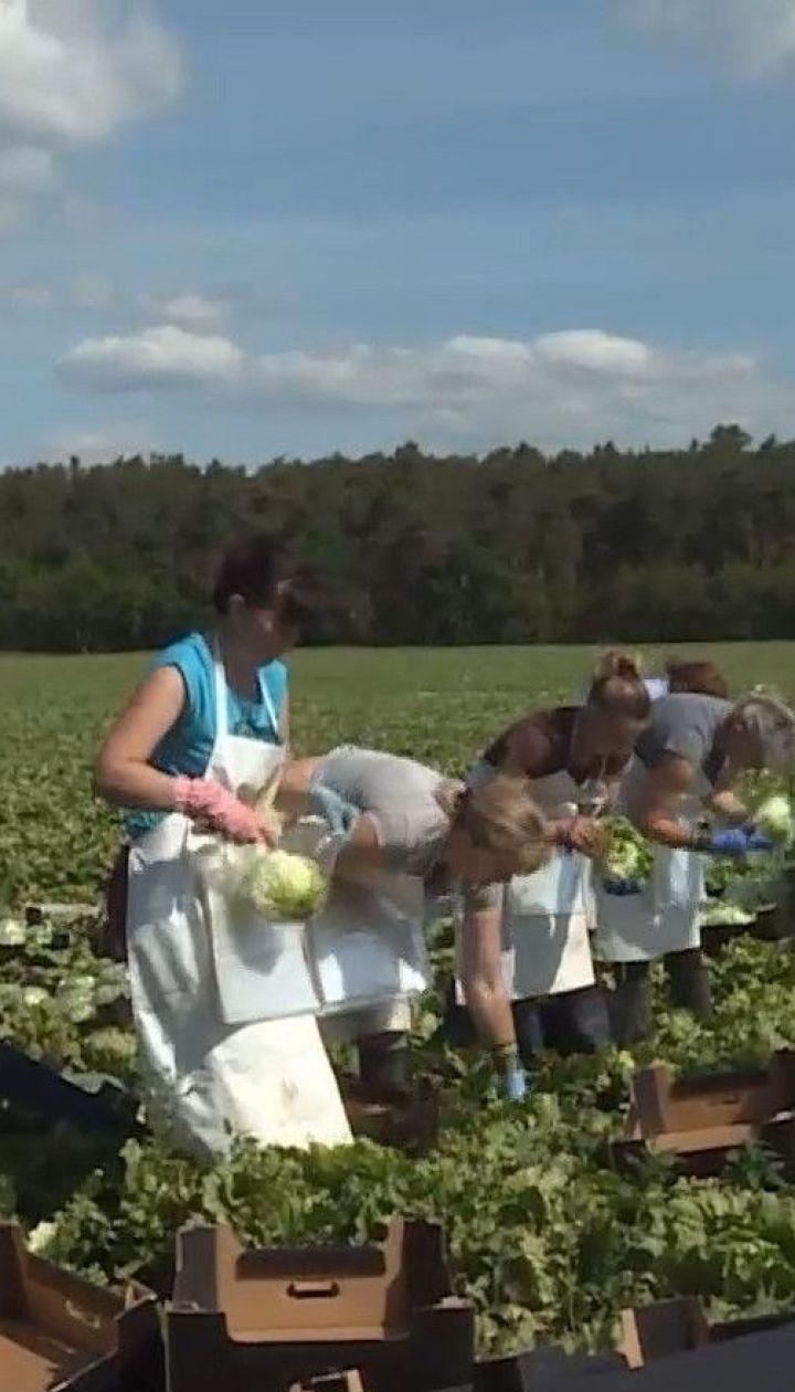 Чехія відкрила кордони для українських заробітчан - без них чимало врожаю може пропасти