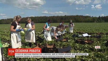 Без рабочих рук из Украины в Чехии может пропасть урожай