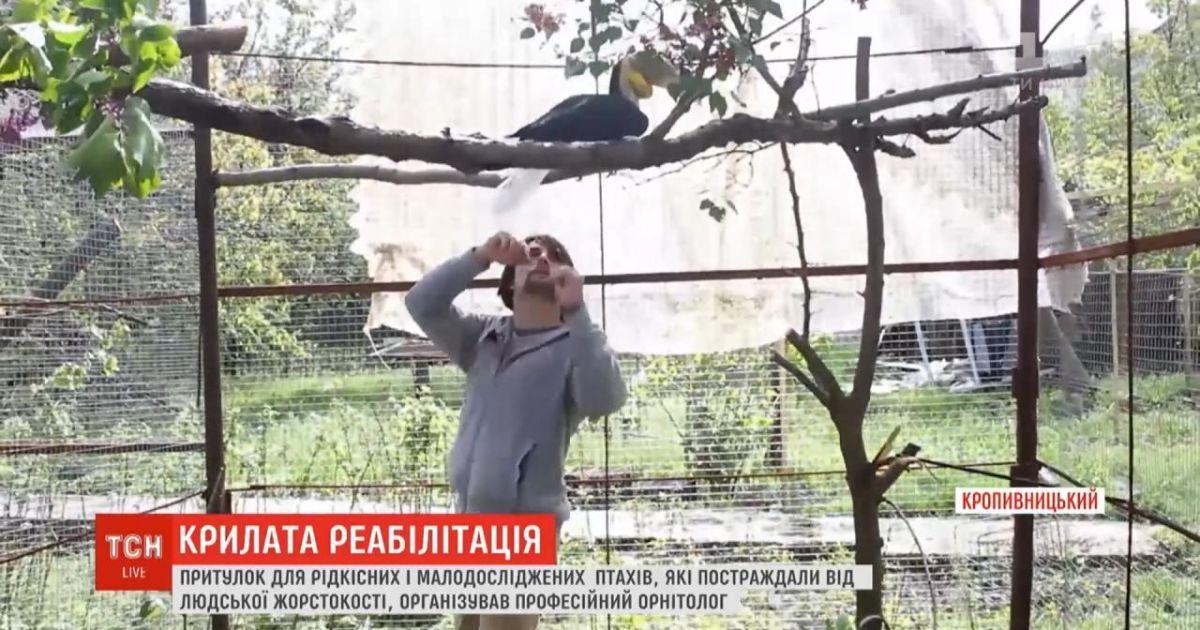 У Кропивницькому орнітолог організував реабілітаційний центр для птахів, яких скривдили господарі