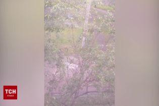 Жительница Броваров сняла на видео перестрелку под своими окнами