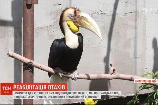 У Кропивницькому орнітолог зорганізував центр реабілітації для птахів, яких скривдили господарі