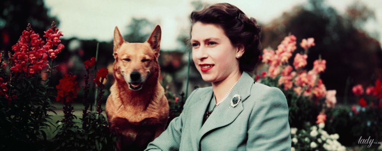 Королівські коргі і не тільки: улюблені собаки королеви Єлизавети II