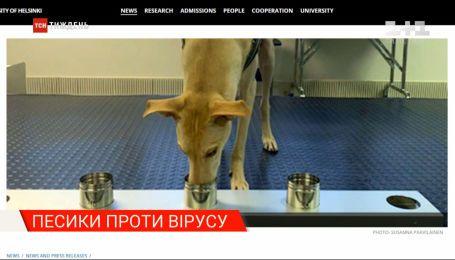 Обезьяны-воры, собаки против вируса и убийственная хитрость картелей: новости с онлайн-трансляции