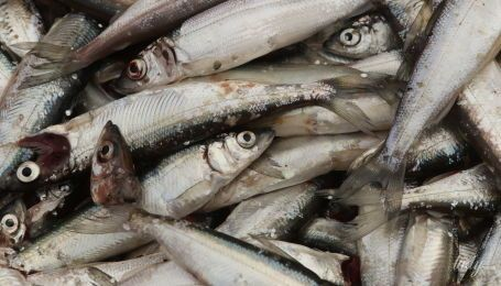 Як вибрати дрібну рибу - поради Андрія Величка