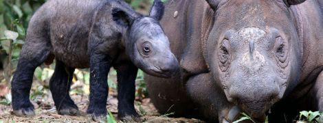 Шестое массовое вымирание дикой природы ускоряется: оно самое быстрое со времен исчезновения динозавров