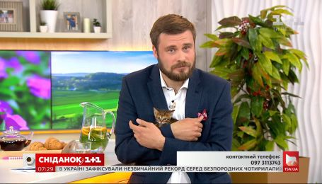 Четверо кошенят шукають теплий дім і люблячу родину