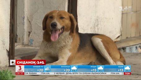 Український Хатіко чекає на господаря: історія неймовірного собаки