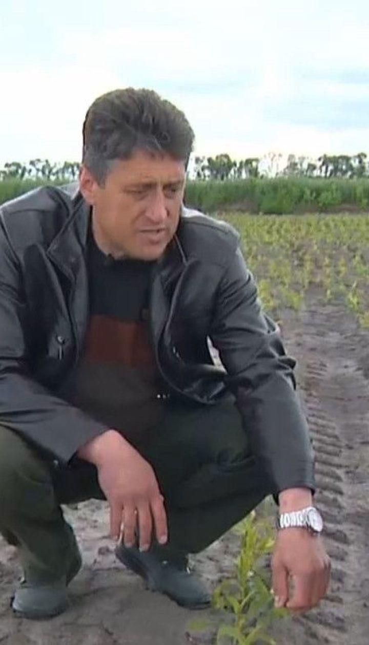 Погодные капризы: засуха, ливни и заморозки нанесли немалые убытки фермерам
