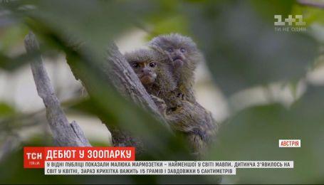 У Віденському зоопарку публіці показали дитинча мармозетки