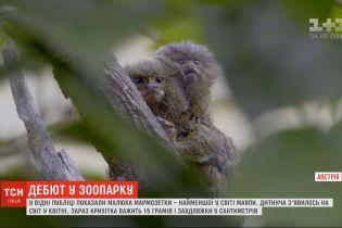 В Венском зоопарке публике показали детеныша мармозетки
