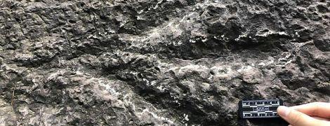 Будто куриные лапки: в Китае нашли следы динозавров, оставленные 190 млн лет назад