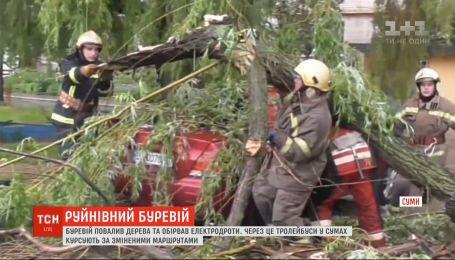 В Сумской области ураган повалил деревья и оборвал электропровода