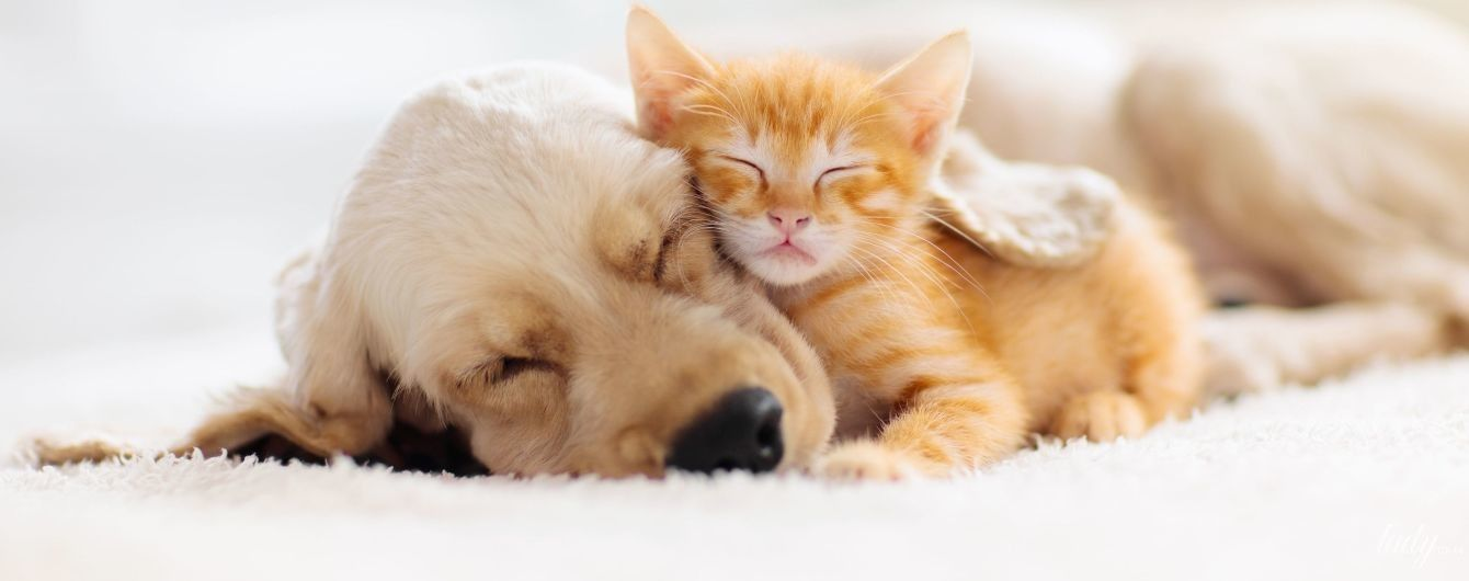 Как выспаться за минимальное количество времени
