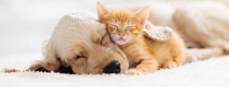 Як виспатися за мінімальну кількість часу