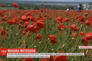 Поле під Миколаєвом стало популярним місцем для фото після того, як там замість гороху проріс мак