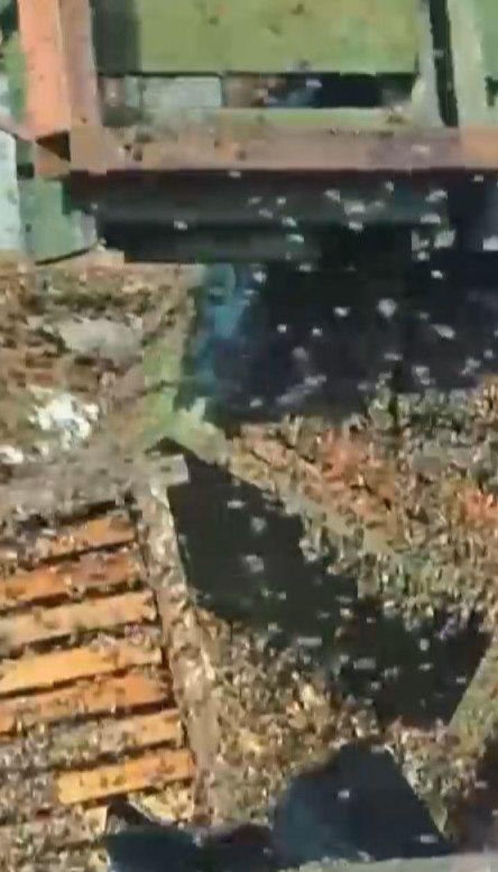 В Венгрии перевернулся грузовик с ульями: десятки тысяч пчел заполонили дорогу