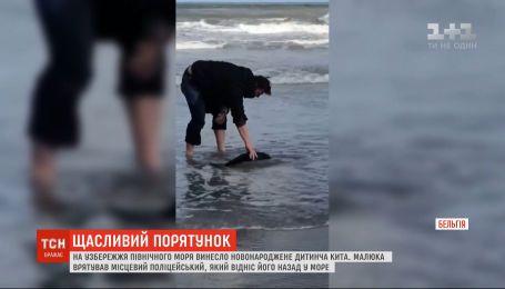 В Бельгии полицейский спас детеныша кита, которого вынесло на побережье Северного моря