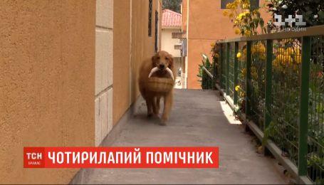 У столиці Еквадору собака навчився самостійно ходити за покупками до найближчої крамниці
