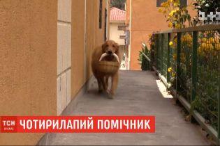 В столице Эквадора собака научилась самостоятельно ходить за покупками в ближайший магазин