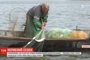 Из-за аномально теплой зимы в Одесской области в настоящее время не могут ловить дунайскую сельдь