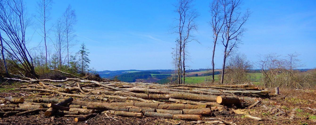 Ліси за останні 115 років стали нижчими і значно помолодшали: це негативно впливає на планету