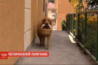 Собака-помощник: в столице Эквадора ретривер помогает своим хозяевам пережить карантин