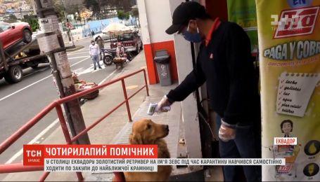 В столице Эквадора собаку научили ходить в магазин и покупать продукты