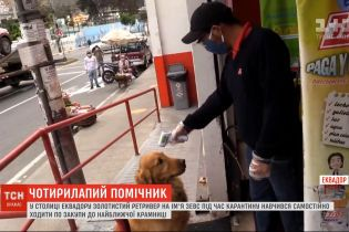 У столиці Еквадору собаку навчили ходити до магазину і купувати продукти