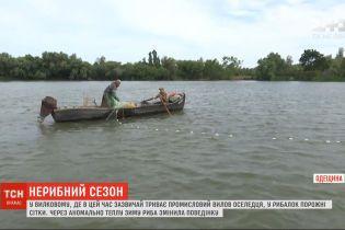 Из-за аномально теплой зимы в Одесской области не ловится дунайская сельдь