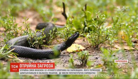 Ядовитая змея укусила 12-летнего мальчика во время отдыха на берегу реки