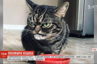 Українка у США тримає вдома найпохмурішу кицю в світі