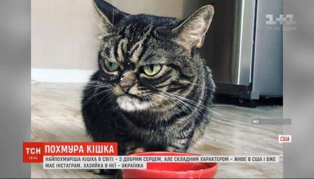 Украинка в США держит дома самую хмурую кису в мире