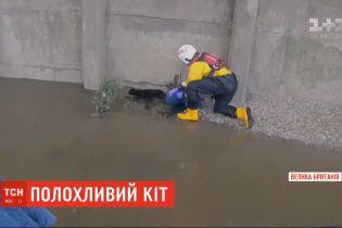 У Лондоні рятувальникам ледь вдалось витягнути з Темзи полохливого кота