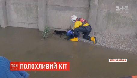 В Лондоне спасателям едва удалось вытащить из Темзы пугливого кота