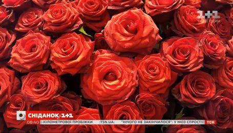 День червоної троянди: що приховує ця квітка