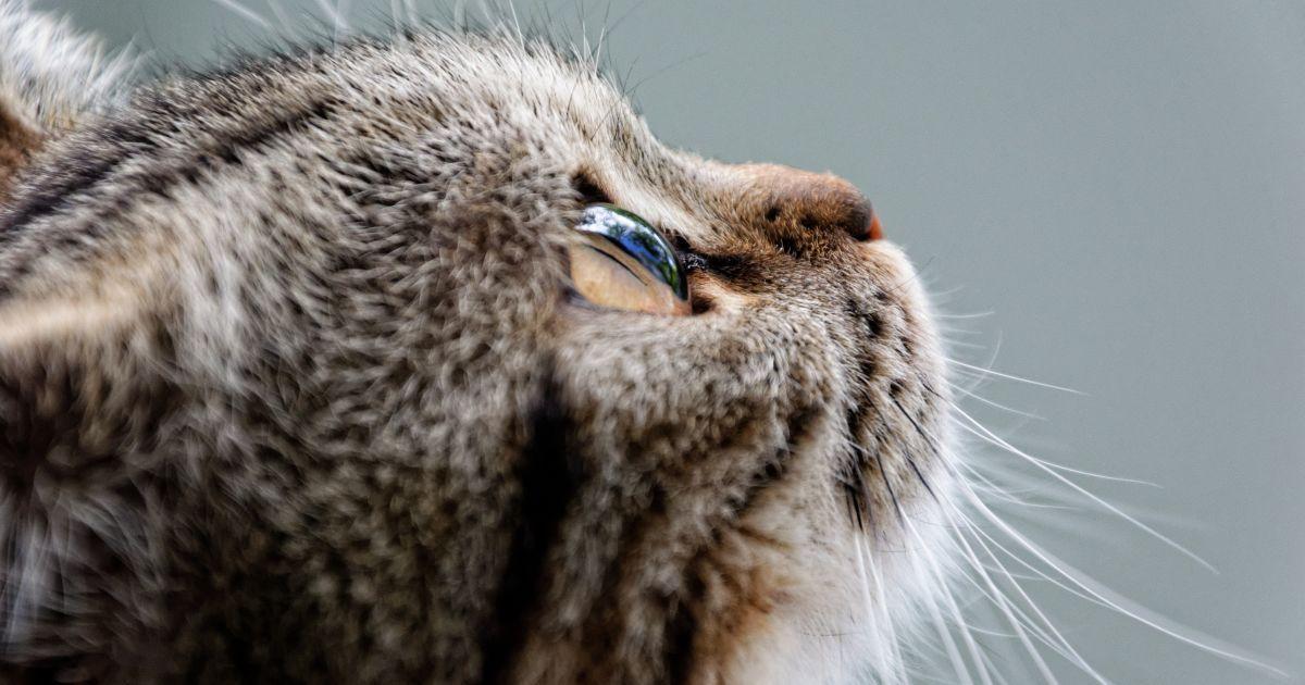 В Одеській області чоловік підстрелив чужу кішку: це зафільмували очевидці