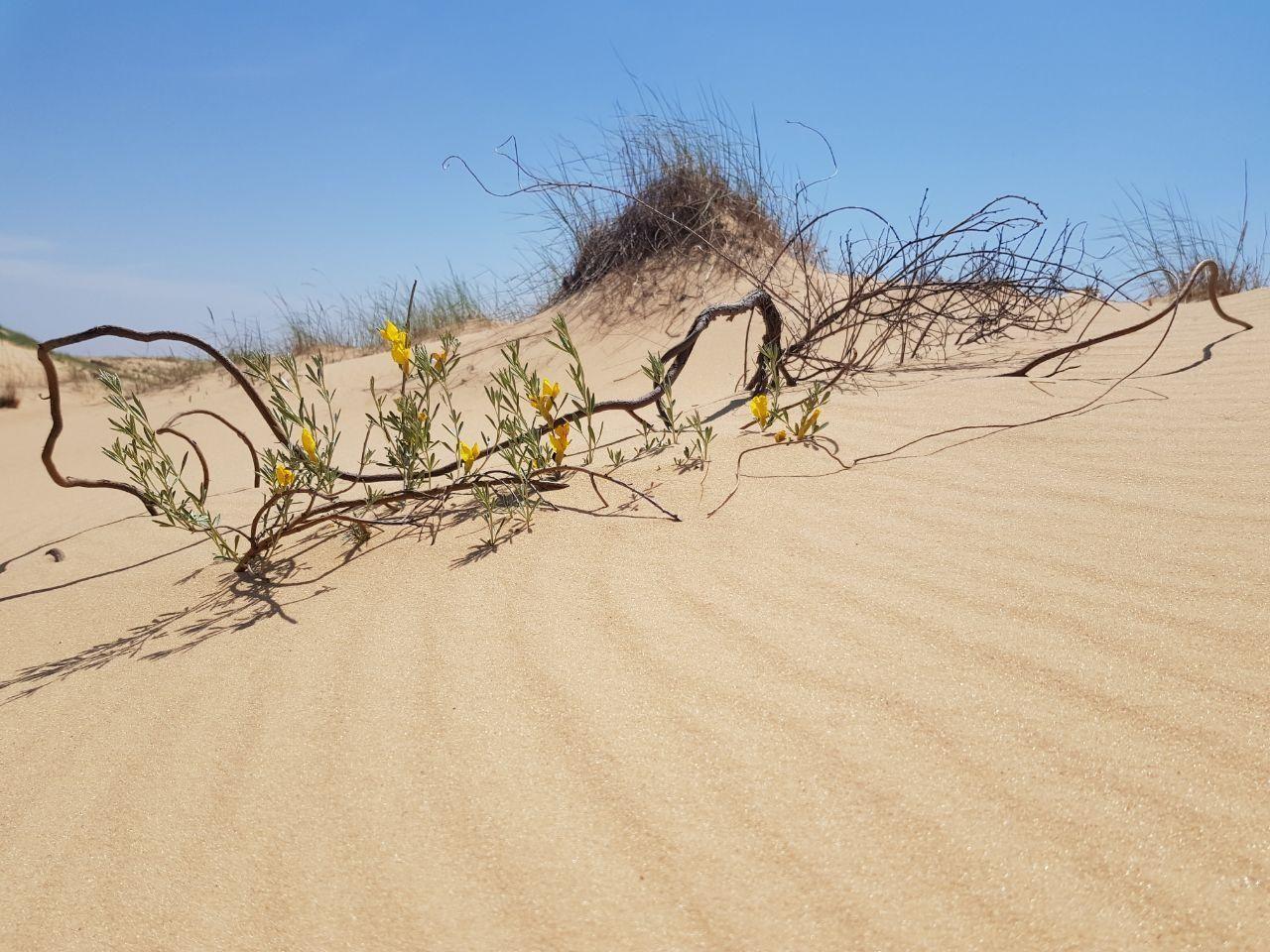 Олешківські піски_5