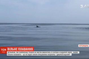Дельфіни супроводжують працівників нацпарку у морі Херсонської області