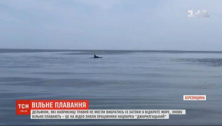 Дельфины сопровождают работников нацпарка в море Херсонской области