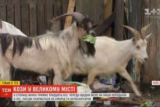 Столичні рогаті: у Києві жінка тримає тридцятьох кіз