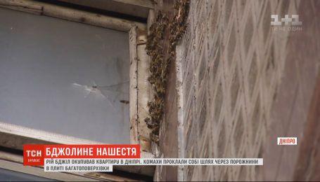 В Днепре пчелы оккупировали квартиру жительницы спального района