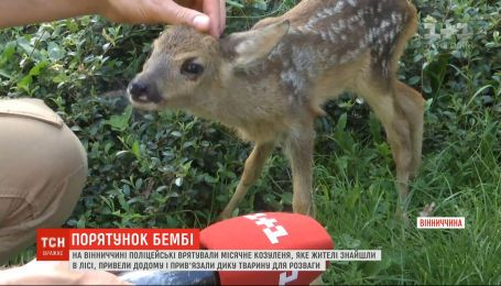 Держали на привязи ради развлечения: в Винницкой области селяне издевались над малышом косули