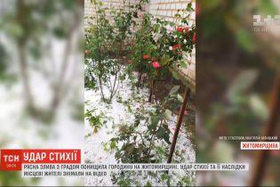 Рясна злива з градом понищила городину у Житомирській області