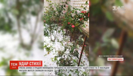 Сильный ливень с градом уничтожил урожай в Житомирской области