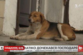 Український Хатіко нарешті знайшов родину