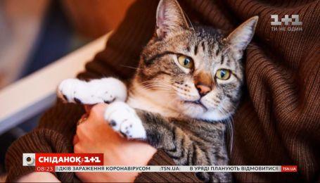 Поради для вдалого селфі з котом