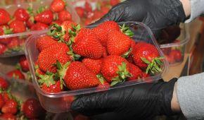 Через холодну погоду сезон полуниці в Україні затримався: якою буде ціна ягід