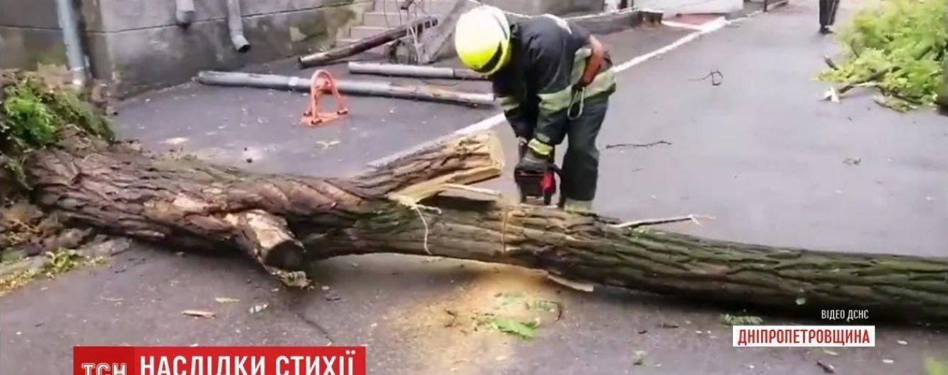 В Днепропетровской области дерево упало на прохожую