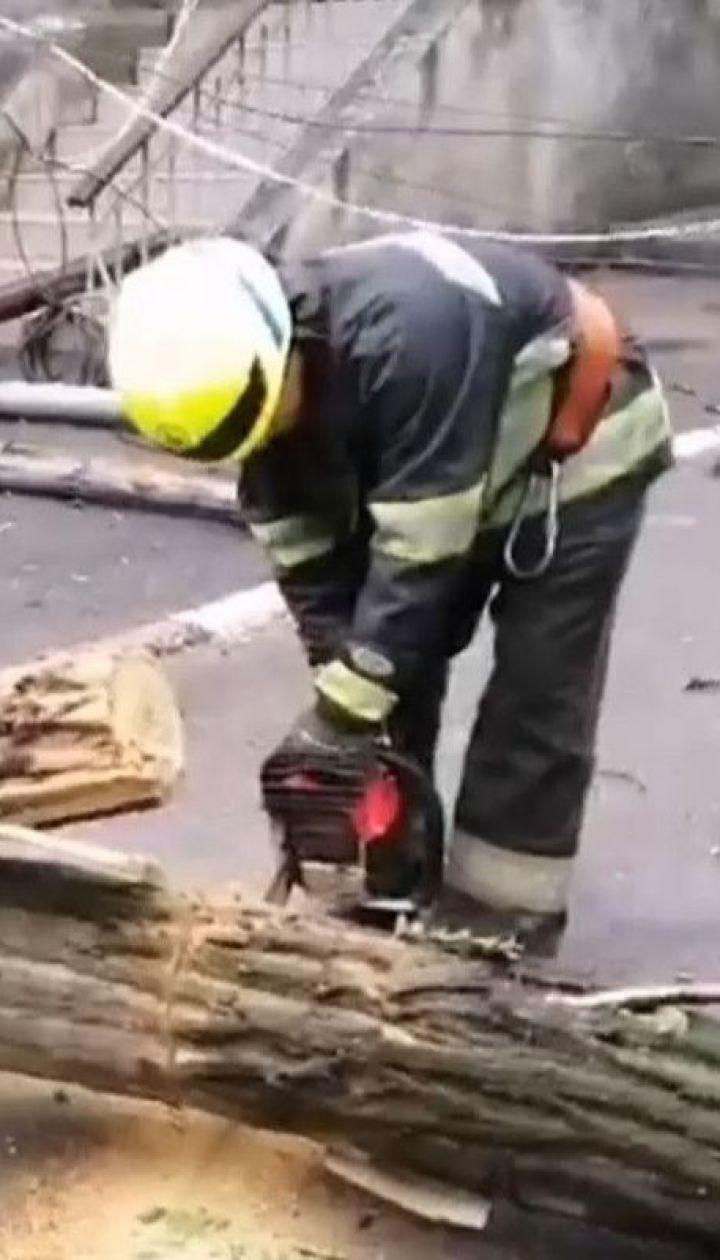 Негода в Україні: четверо людей постраждали внаслідок падіння дерев